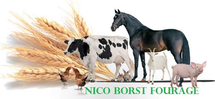 24 Nico Borst