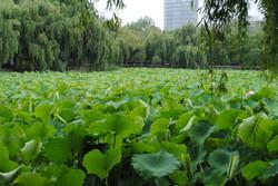 Green Park Lake - Kunming China