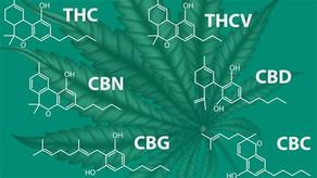 A little about cannabinoids.