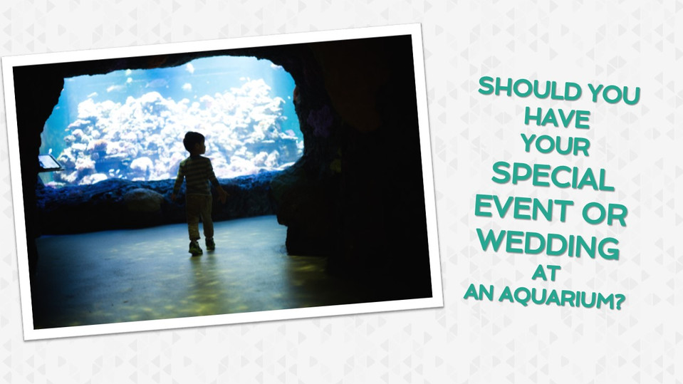 Should You Have Your Wedding At an Aquarium?