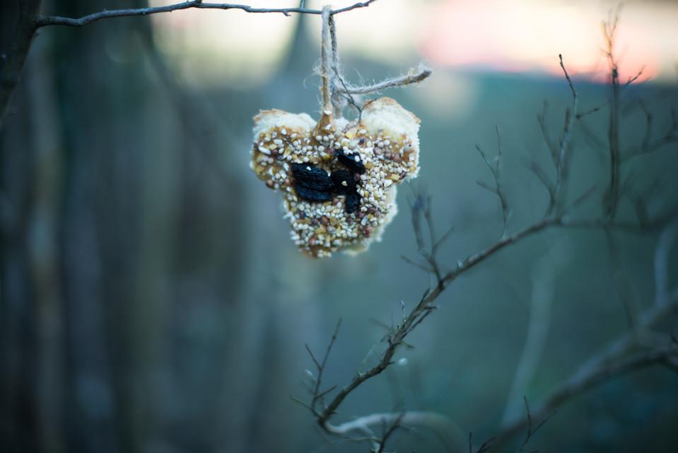 "Bird Seed Ornament ""Cookies"" {Pinterest VS Reality}"