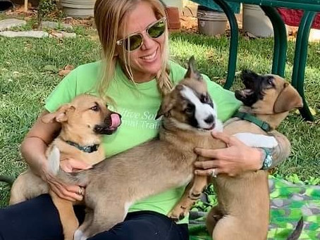 The Importance of Proper Puppy Socialization