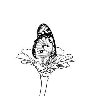 Butterfly Vector Art