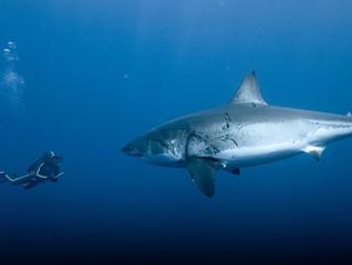 Kleine Fische, grosse Haie; Vom ewigen Kampf in den Fluten