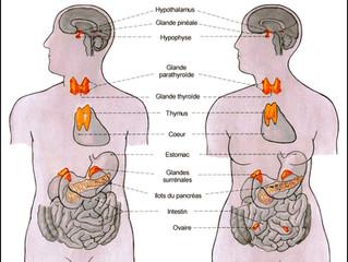 Les effets du yoga taoïste interne sur le système hormonal