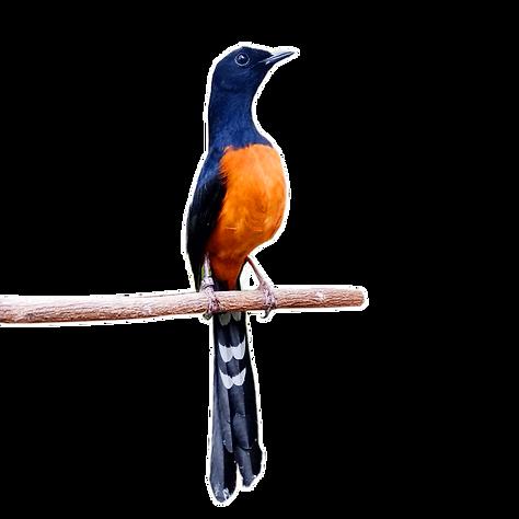 Birdwatching Glamping