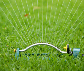 Watering Lawns in the Summer