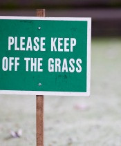 Best Practise Winter Lawn Care