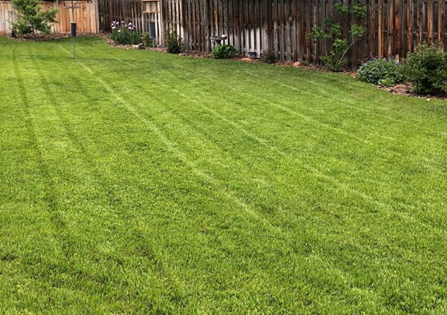 Fresh Lawn Mow