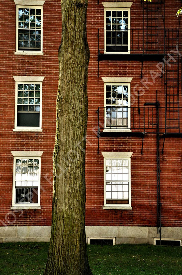 Redstone Boston Tree