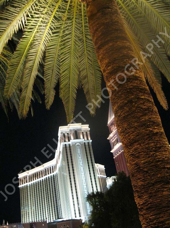 Venetian Palm Tree Las Vegas