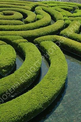 Getty Bush Maze