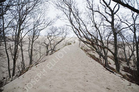 Dune Branches