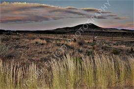 Desert Tall Grass