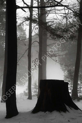 Forest of Fog