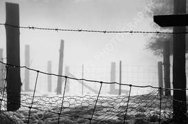 Fenced In Fog