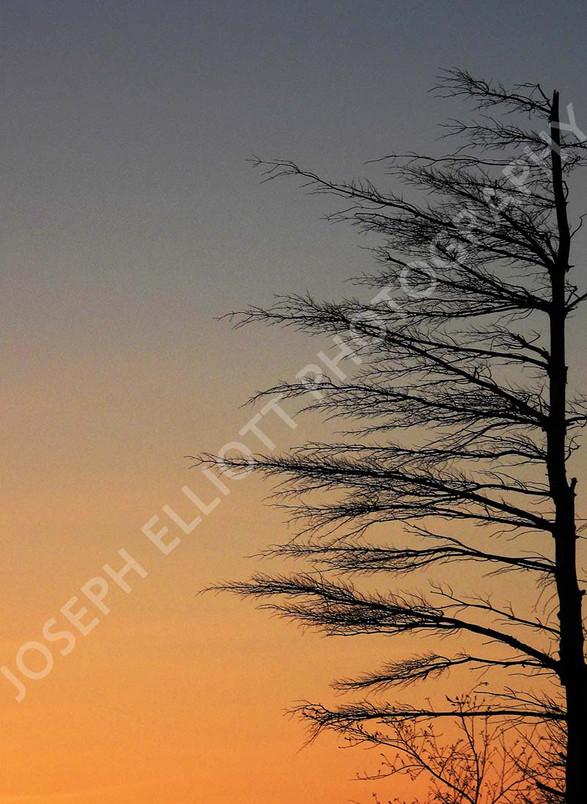 Tree Branch Silhouette Dusk