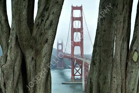 Golden Gate Bark
