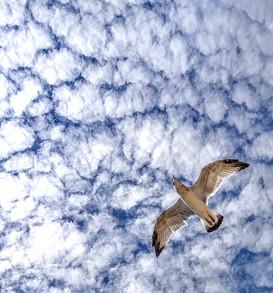 seagull flight in clouds