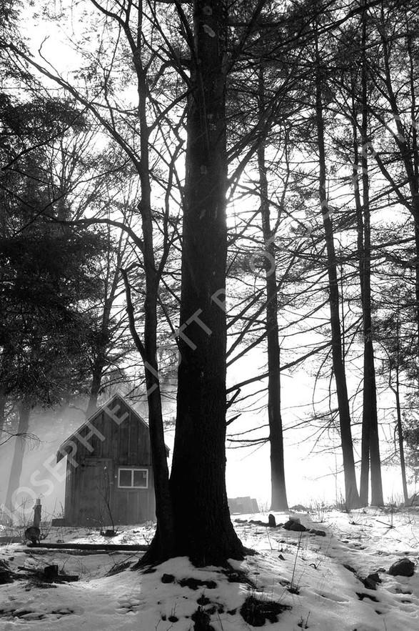 Foggy Wood Shack