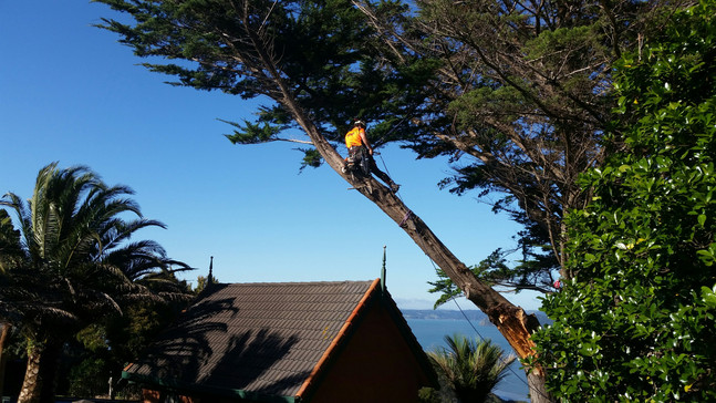 Removing a storm damage branch