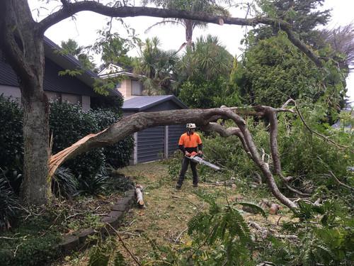 Storm damage branch