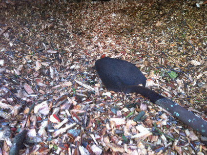 Arborist tree mulch