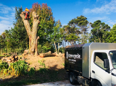 Gum tree removal
