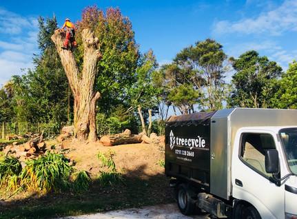 Gum tree removal
