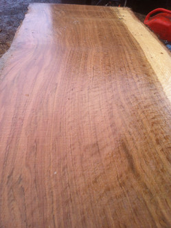 Oak tree wood grain