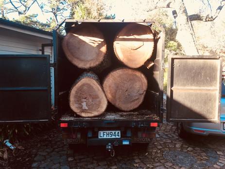 Oak tree logs