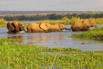 the-elephant-crossing.jpg