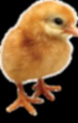 Little Chicken Silo.png