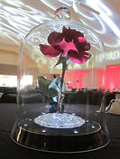 beauty and the beast rental centerpiece