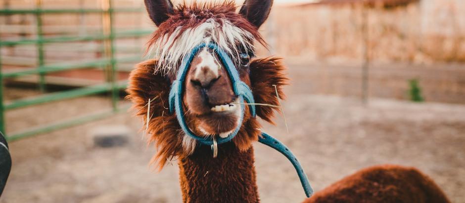 Llama Llama, You Cause Your Own Drama.