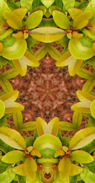 Pattern Play by: Calla Creates