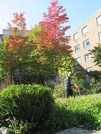 fall plant watering .JPG