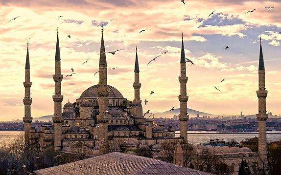Istanbul Birds.jpg