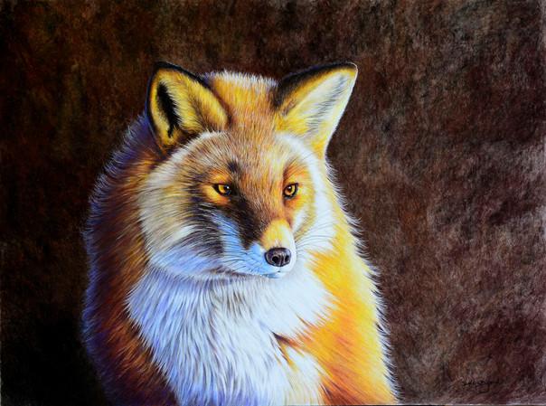 Red Fox at Dawn