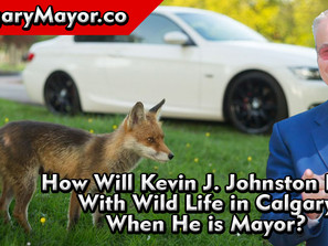 How Will You Deal WIth Wild Life In The City of Calgary - Kevin J Johnston
