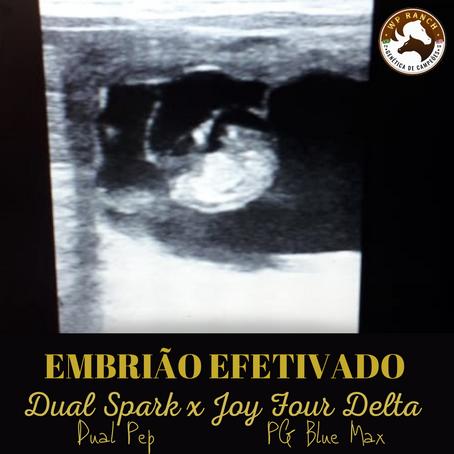 EMBRIÃO EFETIVADO - JOUR FOUR DELTA (PG Blue Max) com DUAL SPARK (Dual Pep)