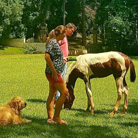 A paixão de Claudia Motta pelo cavalo Paint Horse