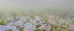 hortensias aquarelle