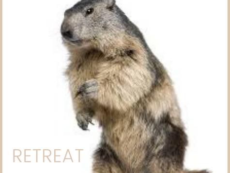Groundhog Medicine