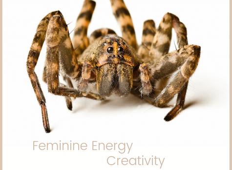 Spider Medicine