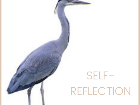 Animal Medicine:  Blue Heron