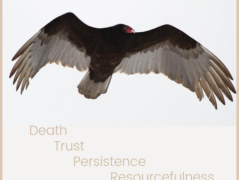 Animal Medicine: Turkey Vulture