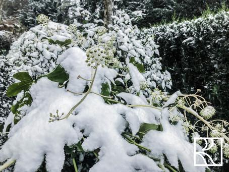 Le jardin en hivernage