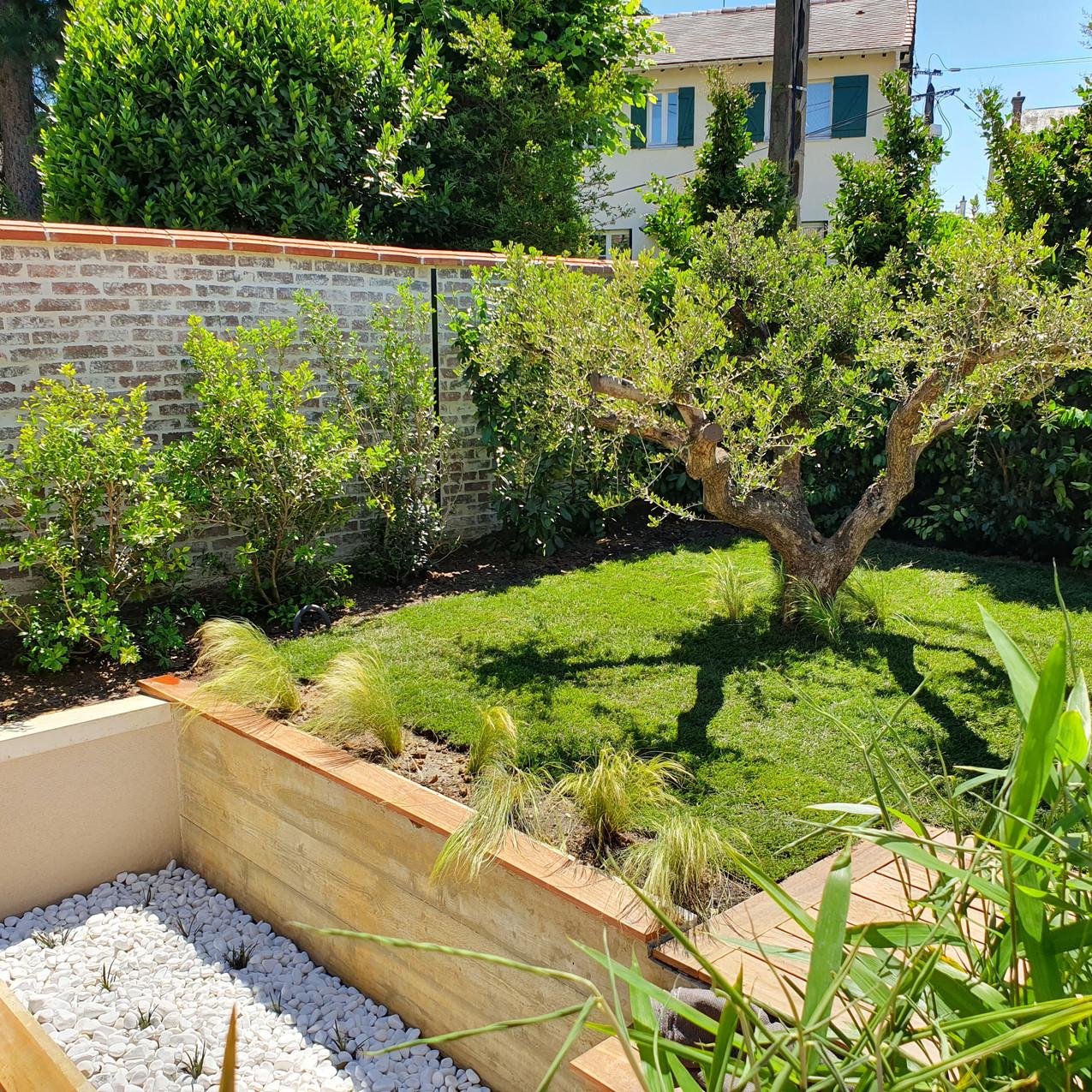 Jardin avec olivier