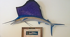 sailfish taxidermy